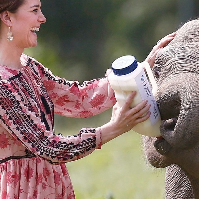 kate-middleton-y-un-bebe-elefante